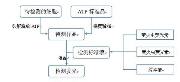 使用双荧光素酶报告基因检测系统,结合专用载体系统,即表达第二个报告